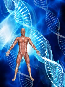 3D male figure with muscle map on a medical background with DNA strands